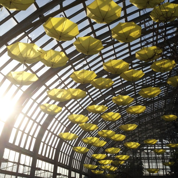 garfield conservatory1 (1)
